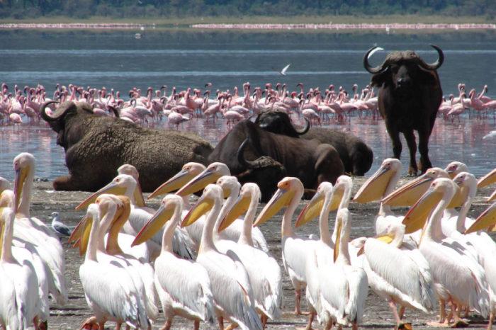 5 Days Lake Nakuru – Masai Mara – Lake Naivasha
