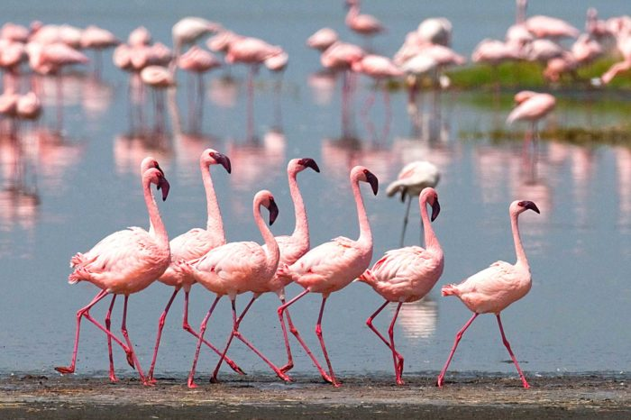 1 day Lake Nakuru Tour