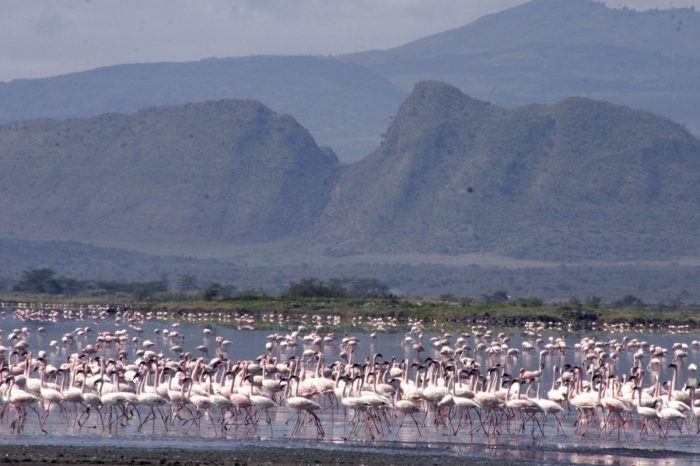3 Day, 2 Nights Safari to Lake Nakuru ,Lake Elementaita Hotsprings & Kariandusi Archeological Museum and Lake Naivasha
