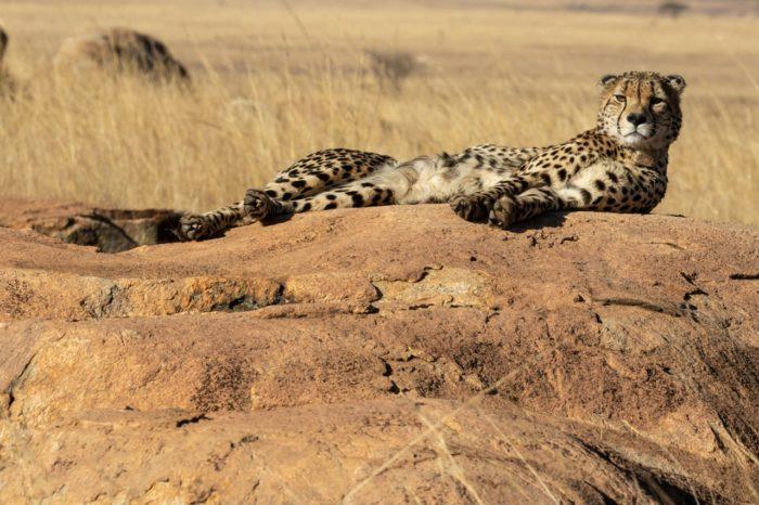 1 Day Amboseli Tour