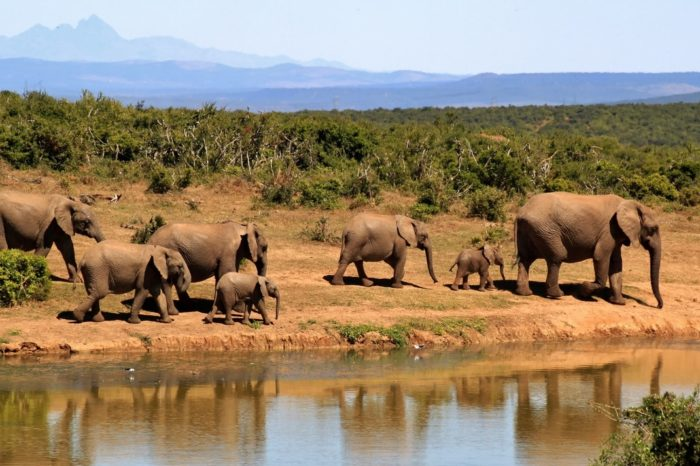 5 Days Amboseli – Tsavo West – Tsavo East – Kenya Lodge Safari Package