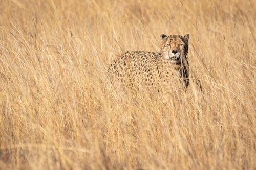 7 Days Samburu – Aberdare – Lake Nakuru – Masai Mara Safari