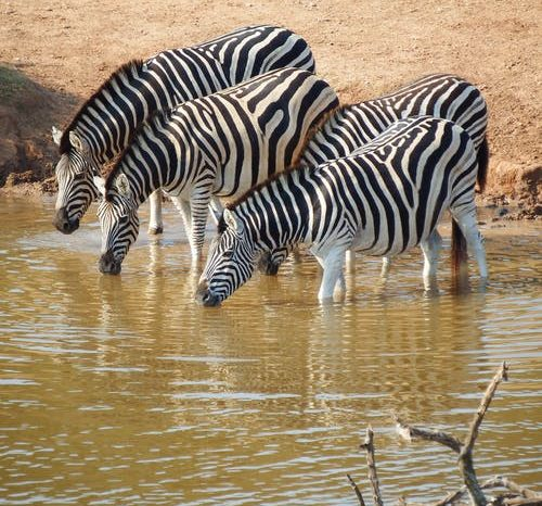 4 Days Lake Nakuru / Masai Mara Camping Safari