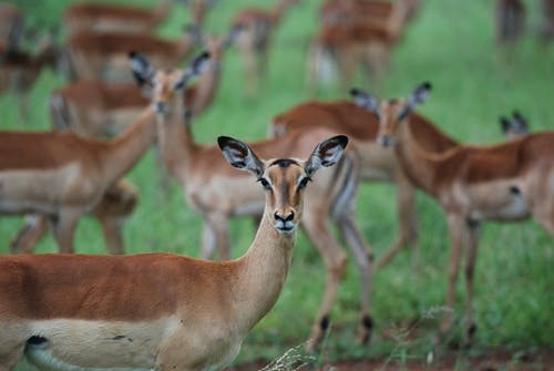 4 Days (3 Nights) Masai Mara Air safari