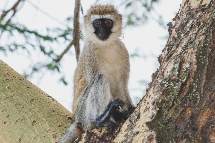 5 days Trip to Aberdare, Ol Pajeta Animal & Chimps Sanctuary & Samburu National Reserve